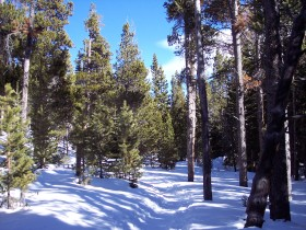 Bierstadt Lake trail in winter