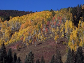 Colorado fall colors near Piney River Ranch, Vail