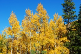Fall color along the East Lake Creek trail, near Vail, Colorado