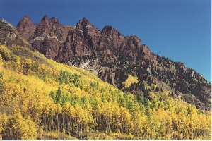 Fall color aspens, near Aspen, Colorado