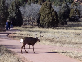 Mule deer at Garden of the Gods