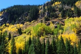 Fall color along the Beaver Lake trail, Colorado