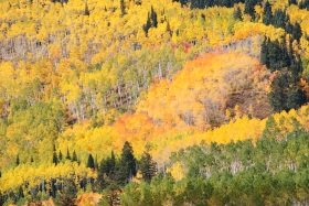 Snowmass Creek Trail, Colorado fall colors.